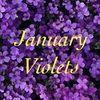 januaryviolets